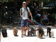 Dog Walker and Pet sitting jobs in Eastern Massachusetts
