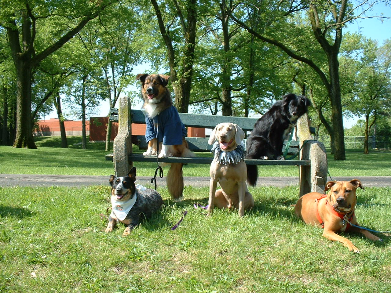Small Doggy Playdates At Meadows Pet Resort In Holliston MA Boston Dog Lovers