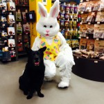 Unleashed by Petco Easter Bunny Pictures Allston & Hingham