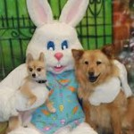 Easter Bunny Pet Photos 2016  at Petco Quincy
