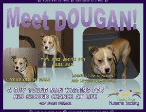 Dougan pit bull mix pet adoption success