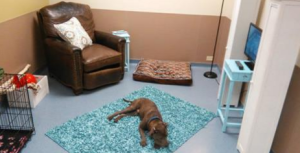 Living Room Created for Shelter Dogs to Help Destress
