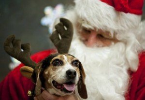Friends of Plymouth Pound Santa Paws Pet Pictures 2016