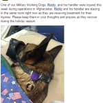 SGT Rocky  Military Dog Earns Purple Heart Honor