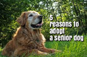 5 Reasons to Adopt a Senior Dog