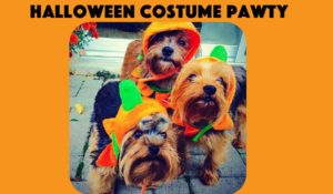 BarkHappy Boston: Halloween Costume Pawty  2017 in Dorchester