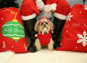STAR Santa Pet Photos 2017 at South Paws Doggie Daycare Pembroke 2017
